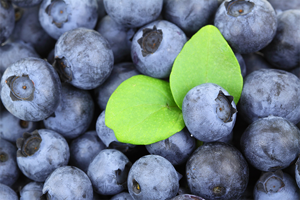 blueberry-header