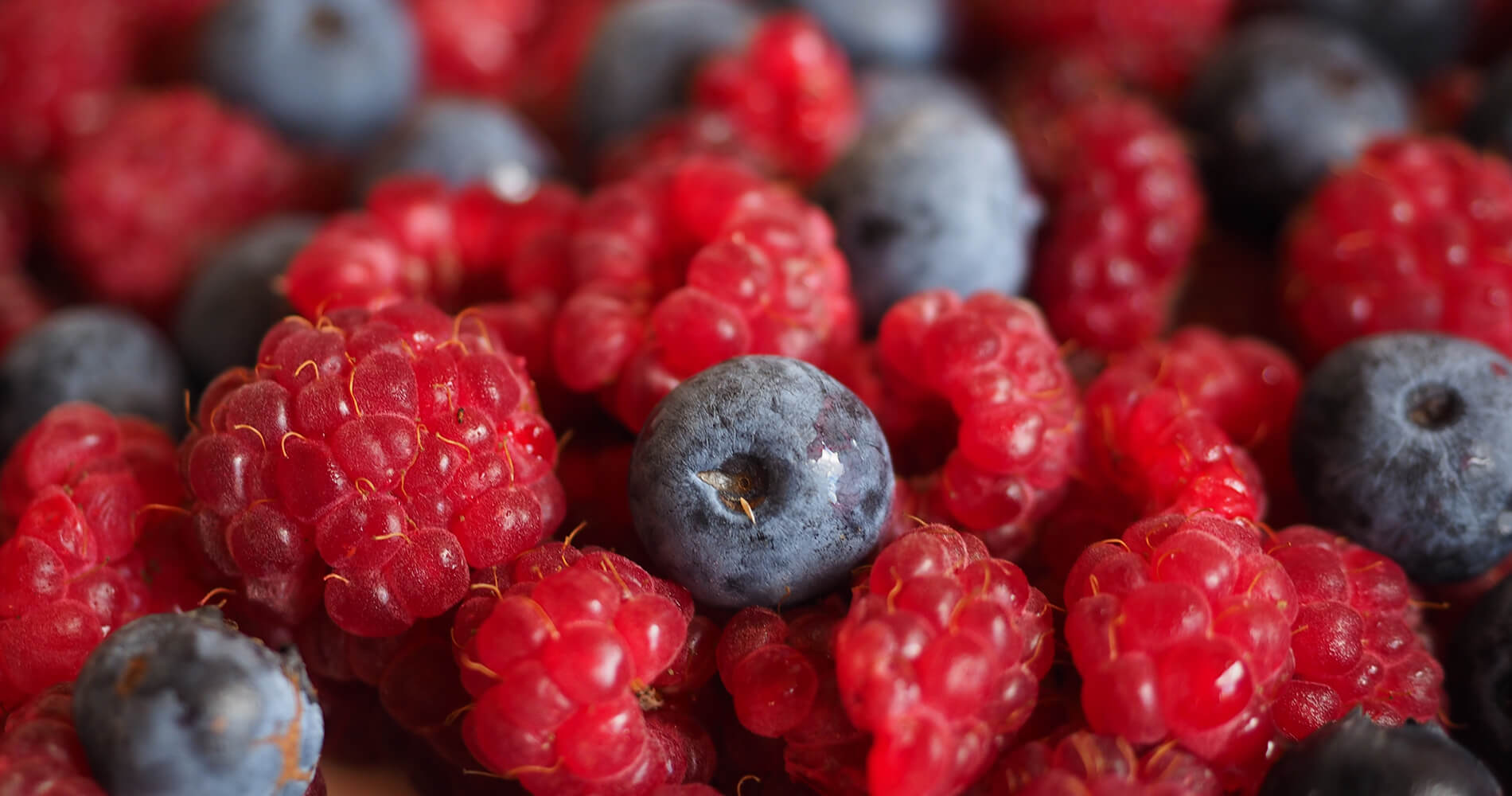 blueberry-raspberry-header