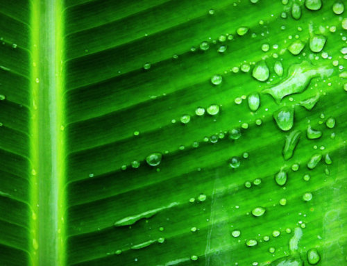 So what is Chlorophyll?